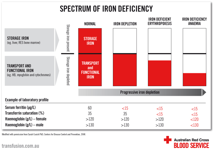 Iron deficiency without anaemia | Australian Red Cross Blood
