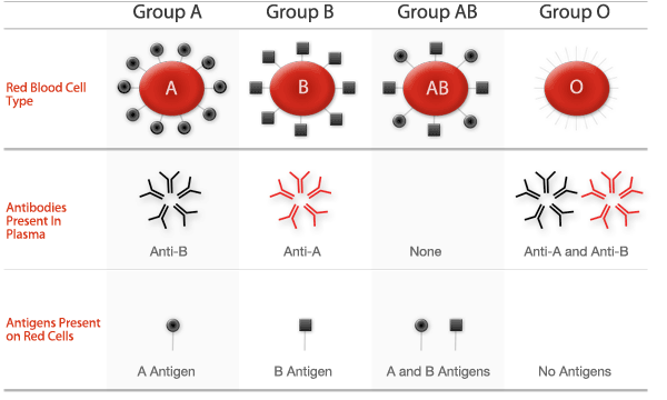 abo blood typing system and antigenicity of red blood cells and blood donation Blood group: blood group, classification of blood based on inherited differences in antigens on the surfaces of the red blood cells the most well-known classification, the abo blood group system, was developed by austrian-born american biologist karl landsteiner in 1901.